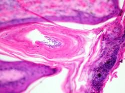vetpathservices, dermatopathology