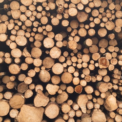 Evergreen Lumber