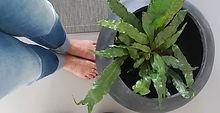 Neem jij soms de tijd om je voeten te bedanken_ Ze dragen je immers de hele dag! Voetreflexologie is