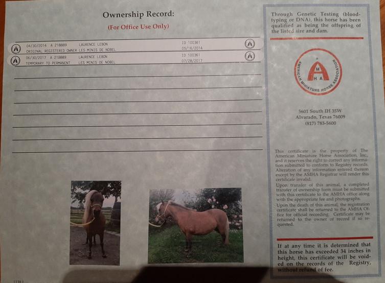 Verso Certificat AMHA Permanent