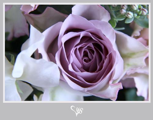 flower312.jpg