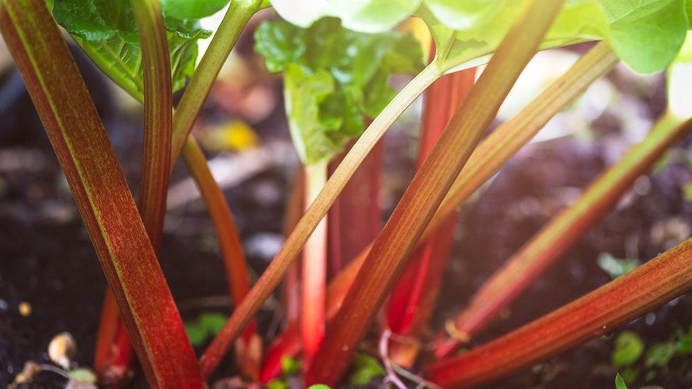 Rhubarb (400g)