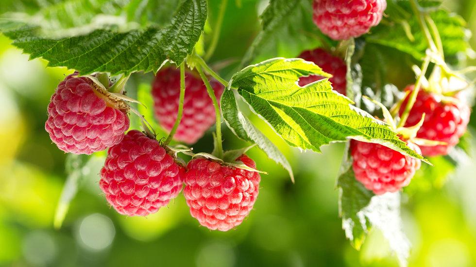 Raspberries (200g)