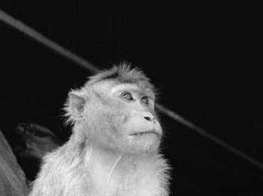 Monkey in Hampi, BW