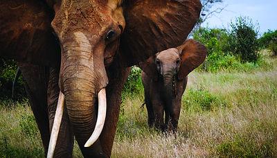 Elefanten, Afrika © Topdeck