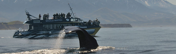 Whale Watching Kaikoura © christchurchnz.com