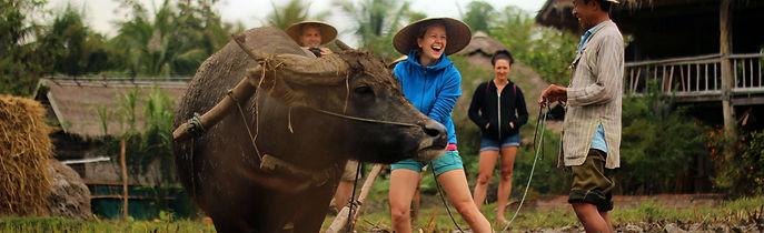 Stray Asia - Mekong