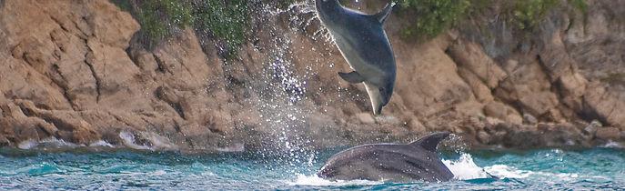 Delfine © Rupert Kogler