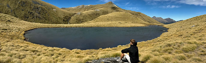 Stray NZ - Te Anau