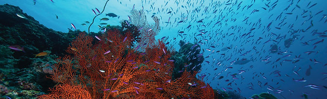 Great Barrier Reef © Tourism and Events Queensland