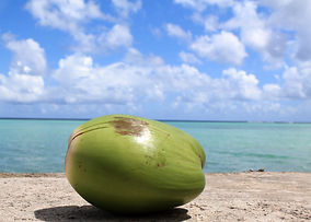 Kokosnuss Guam