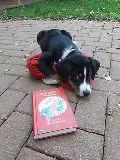 Kira mit Buch 20191022_164342_edited.jpg