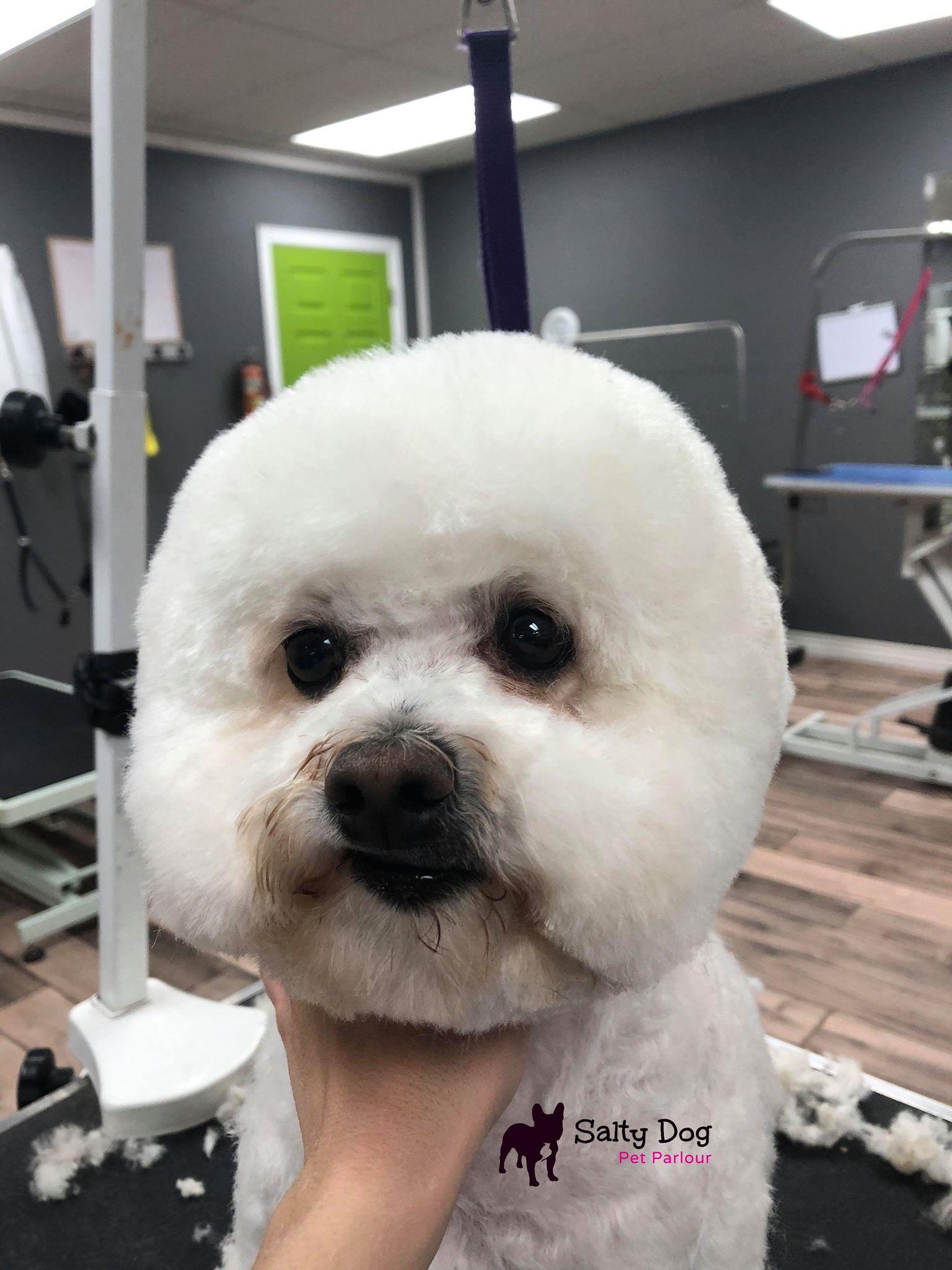 Belleville pet groomer Quinte Trenton