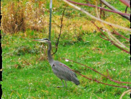 As Seen In My Backyard...
