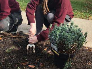 Redeveloping - Gardening Club