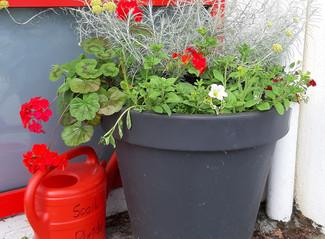 Gardening Club - June Update