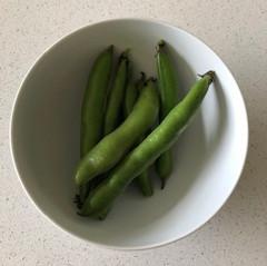 Final Broad Beans Update
