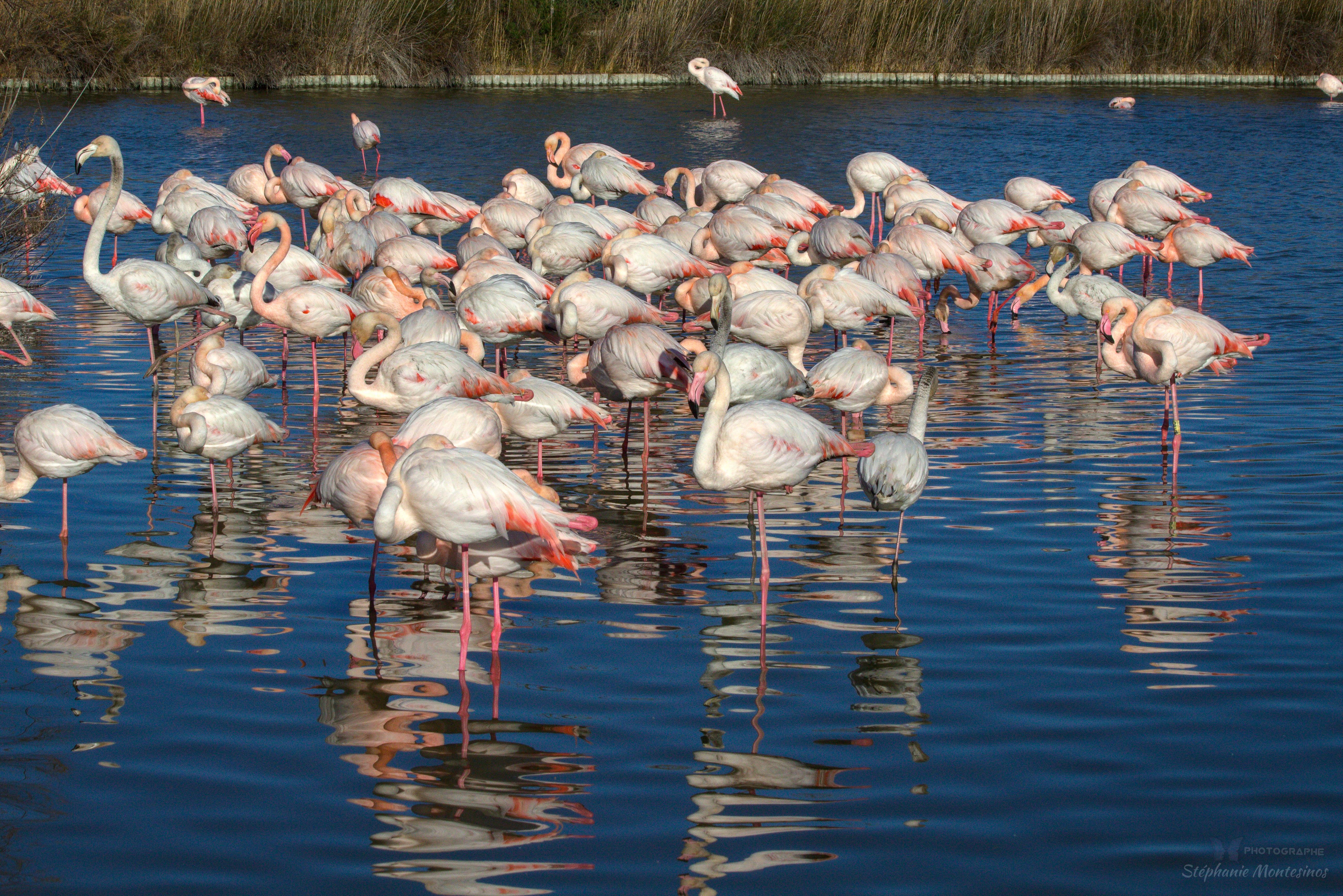 Reserve ornithologique Pont de Gau