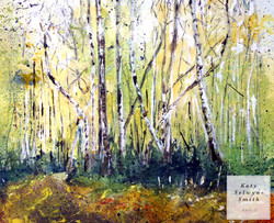 Birches on The Ledges