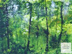 Green Summer Woods