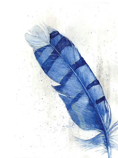 Indigo Feather