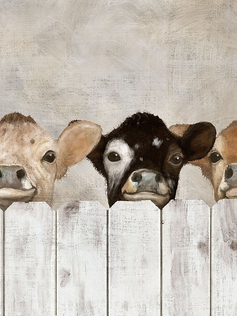 Peeking Cows