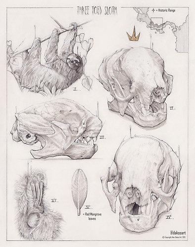 "3 Toed Sloth Study, 8x10"" or 11x14"" High Quality Giclee art print by Alex Dakos"