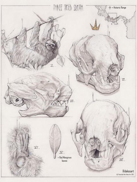 3 toed Sloth Study