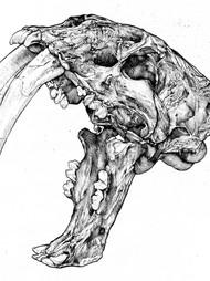 Sabertooth Skull study