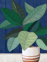 Color Block Plant