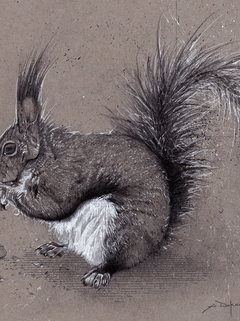 Long eared Squirrel