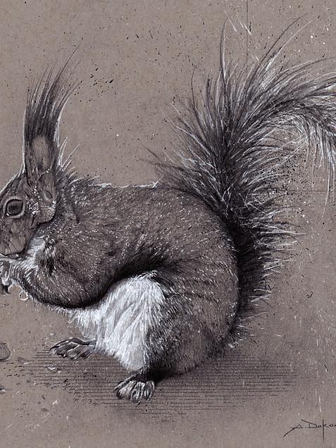 Long eared Squirrel