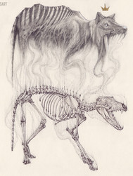 Thylacine Study