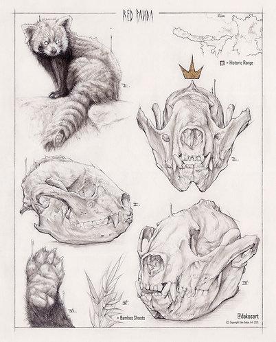 """Red Panda Study, 8x10"""" or 11x14"""" High Quality Giclee art print"""