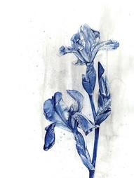 Indigo Iris