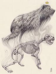 Dinocrocuta Study