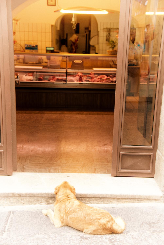 Hund vor der Metzgerei