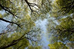 Buchenwälder, Rügen