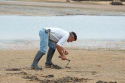Muschelsammler, Portugal