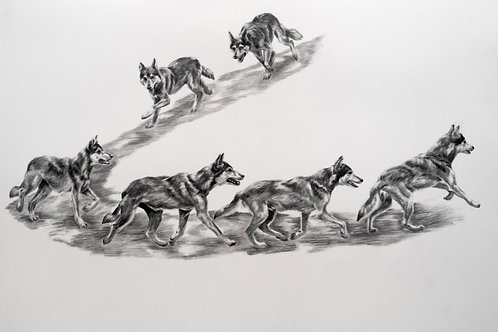 Pacing (Wolf) Drawing
