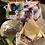 Thumbnail: BEGINNER CRYSTAL BOX