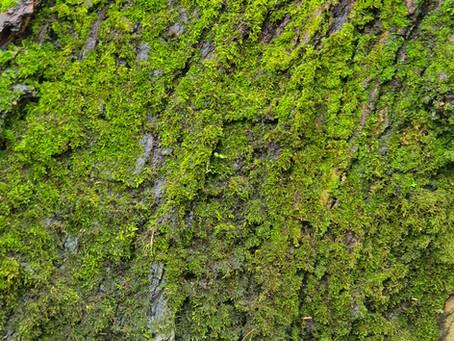 Green Velvet February texture.