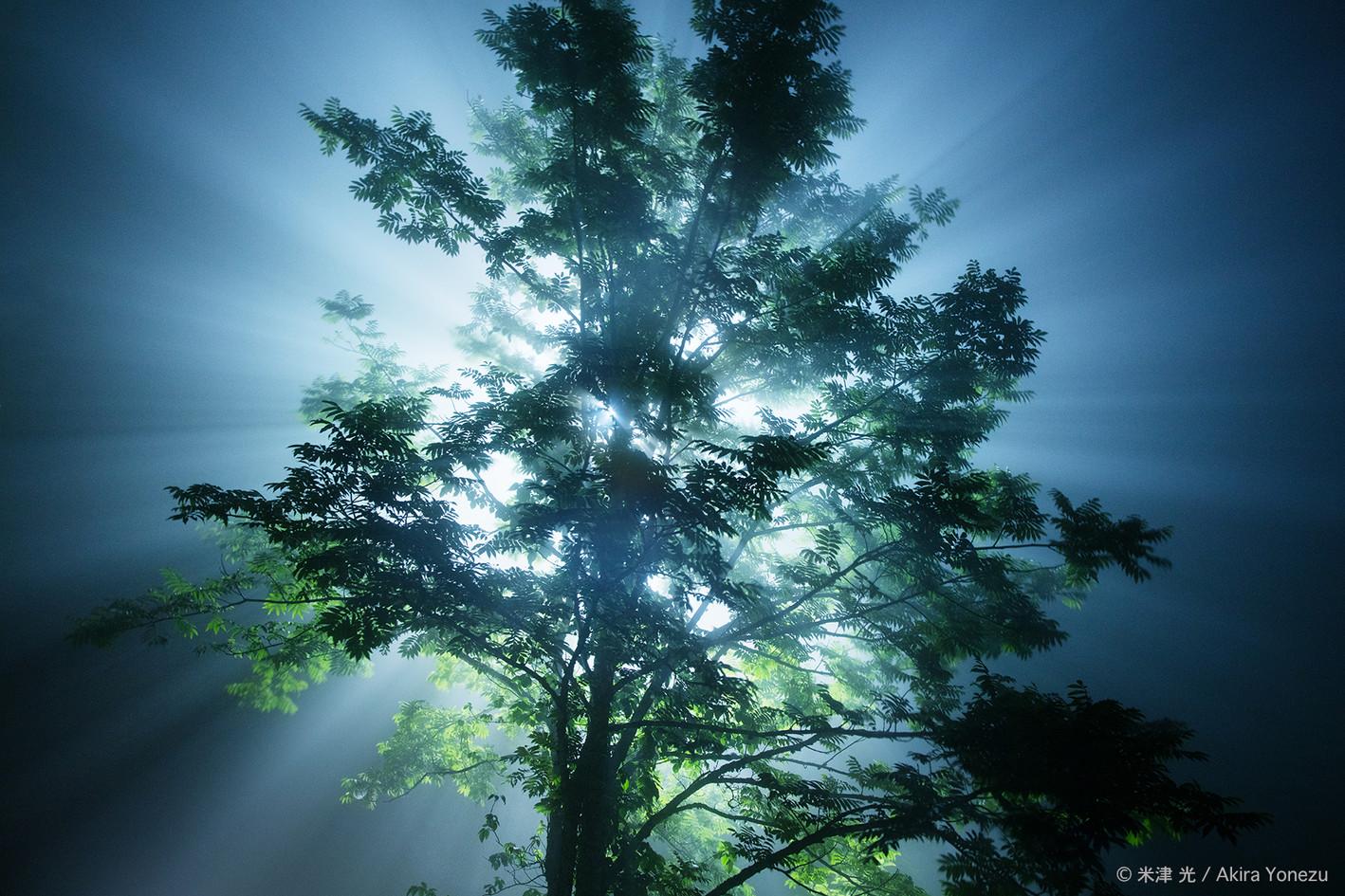剣山の霧の中