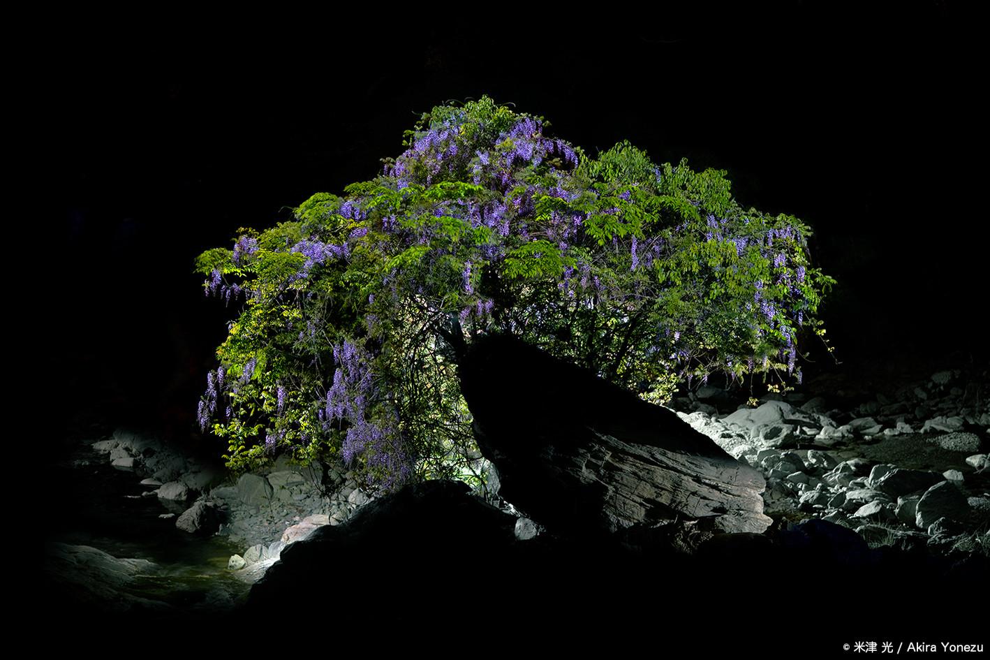 神山 渓流と藤