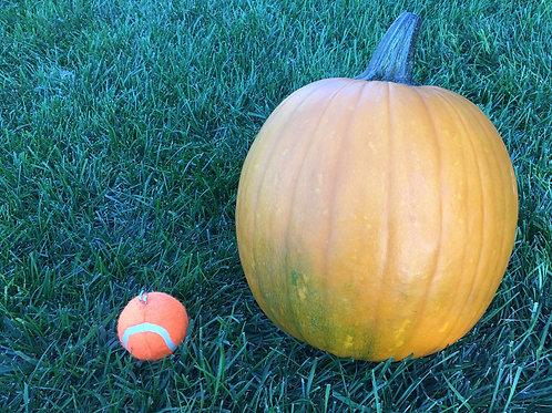 Medium orange pumpkin