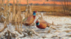 Daybreak Pheasants - POY Image.jpg
