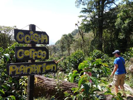 Panama ve Gesha kahveciliğinin geçmişi
