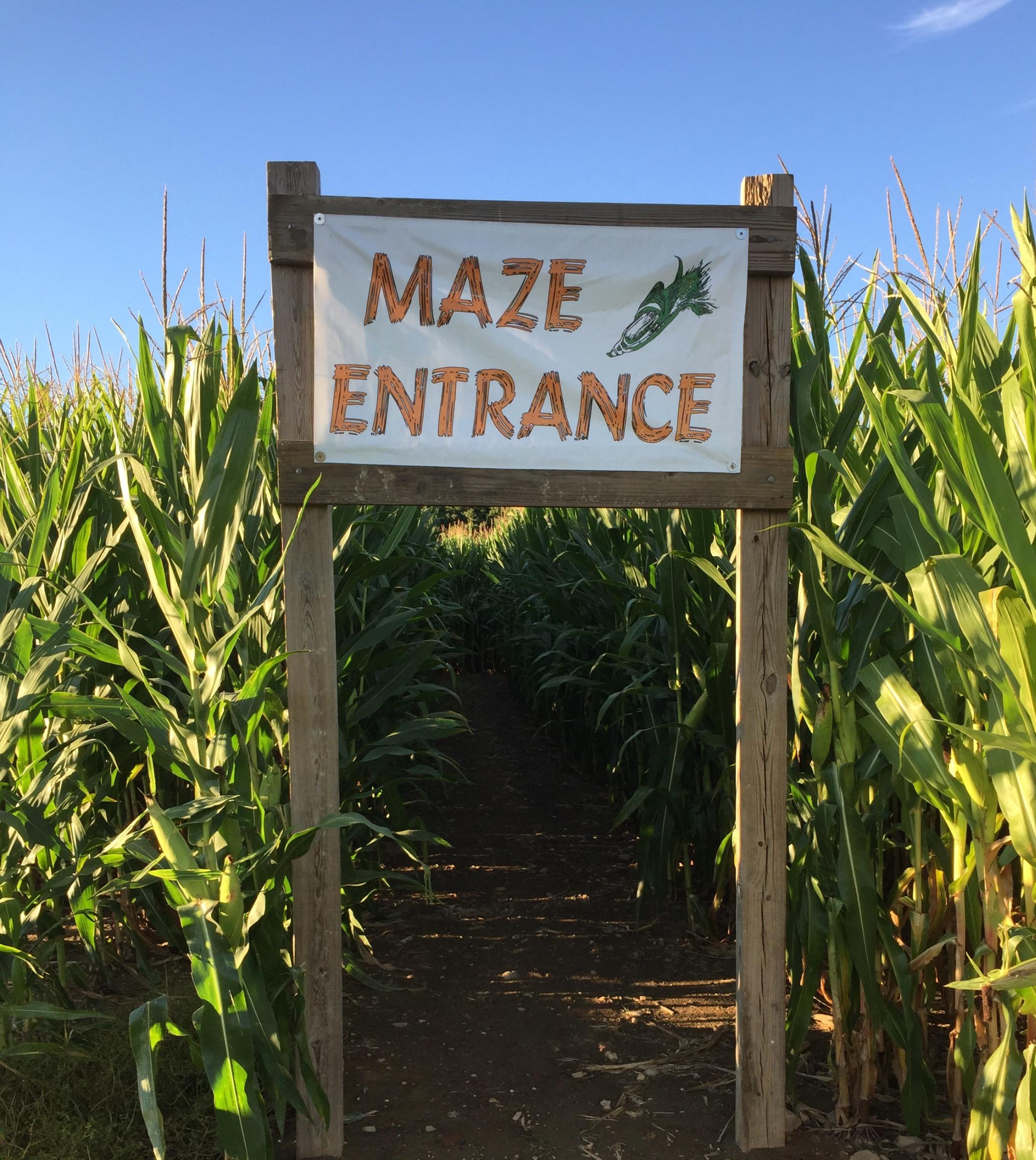 Daytime Corn Maze