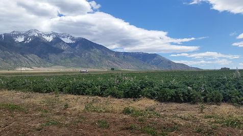 Mona Utah Farm.jpg