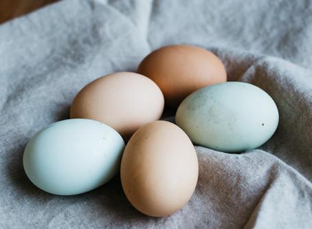 Common Farm Fresh Egg Misconceptions!